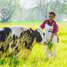 อ.ส.ค. ให้ความรู้โรคเต้านมโคนมอักเสบแก่เกษตรกร ส่งผลต่อผลผลิตคุณภาพน้ำนมดิบ