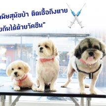 28ก.ย.วันป้องกันโรคพิษสุนัขบ้าโลก  รณรงค์คนไทยช่วยขับเคลื่อนปลอดโรค100%ปี2562